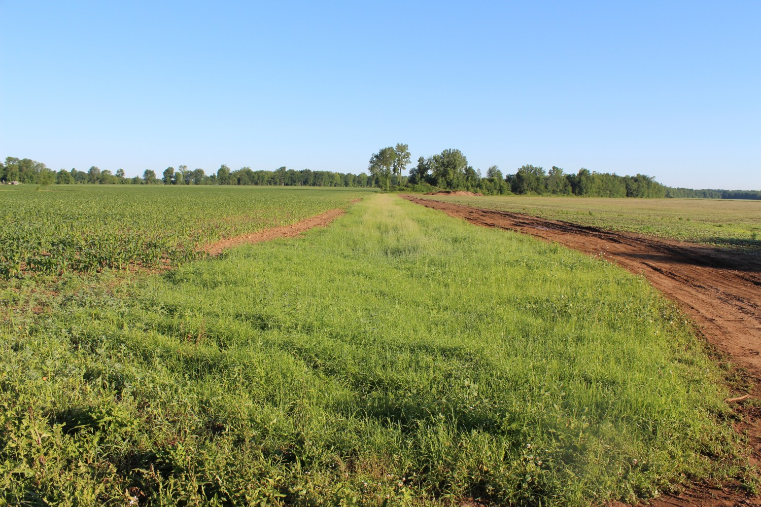 Critical Seeding Project Gallery