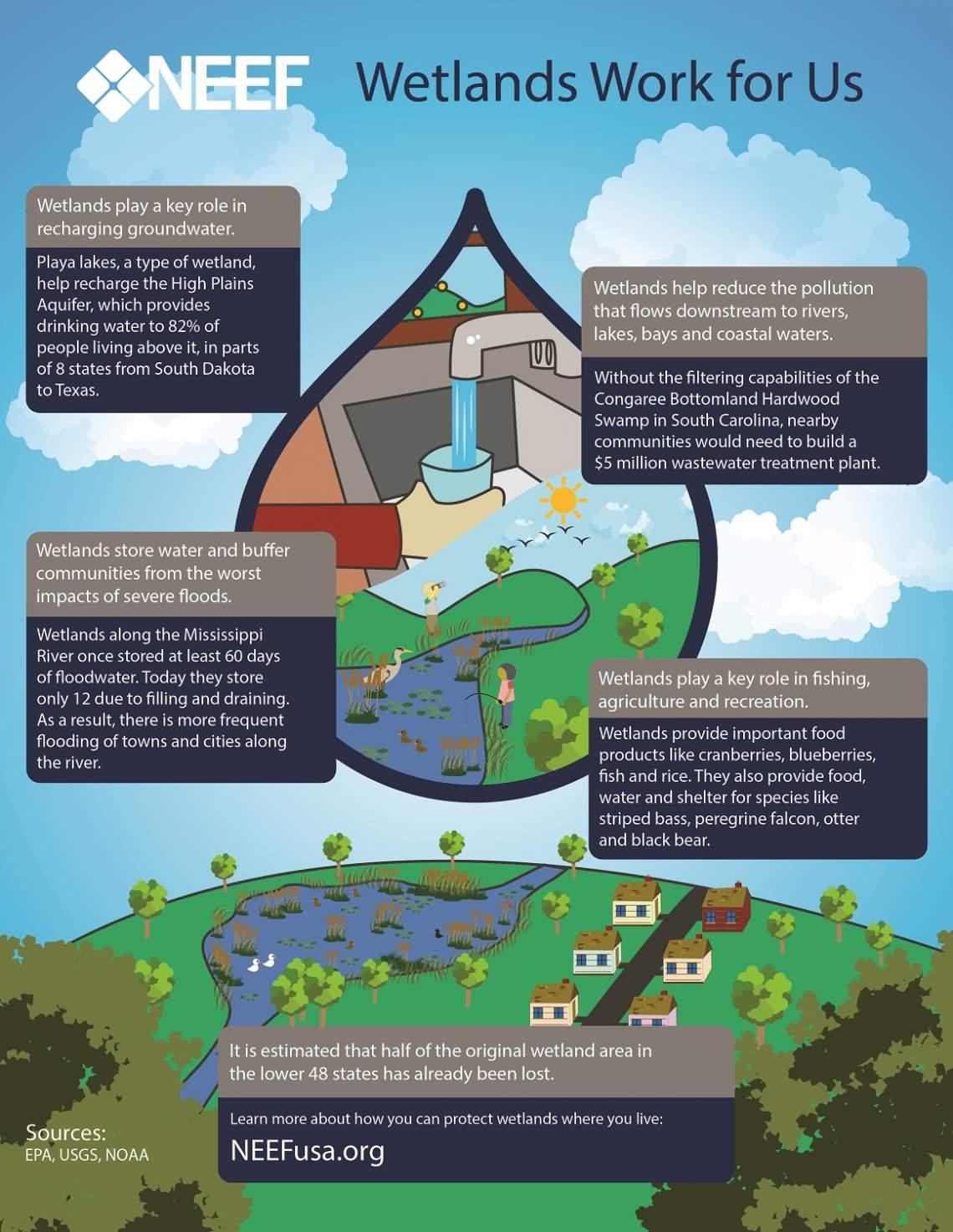 Wetland Restoration Funds For Sodus Creek Sodus Bay