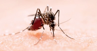 CHEMICAL-FREE OPTIONS FOR MANAGING MOSQUITOES