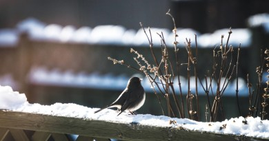 WHERE ARE THE WINTER BIRDS? – Life In The Outdoors