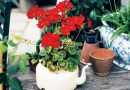 FINDING THE RIGHT PLANT CONTAINER – Green-Thumb Gardener