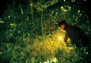 FIREFLY IGNITES THOUGHTS OF CHANGE – Life In The Outdoors