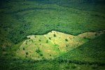 Deforestation and Climate Disruption Are Degrading the Amazon, Endangering Our Survival