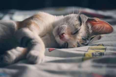 white orange and gray tabby cat lying on gray textile 夢境中的新加坡保險公司廣告 - 故鄉人