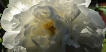Deck Flora-9891