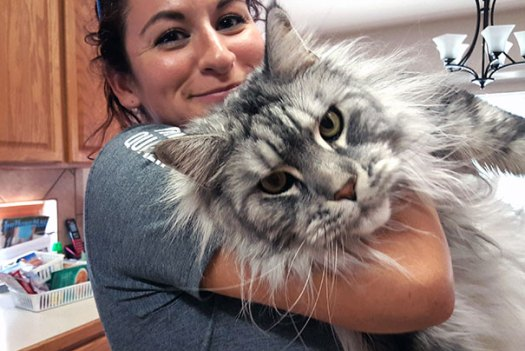 maine-coon-cats 5