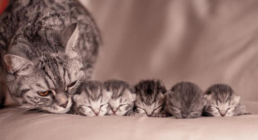 proud-cat-mommies 8