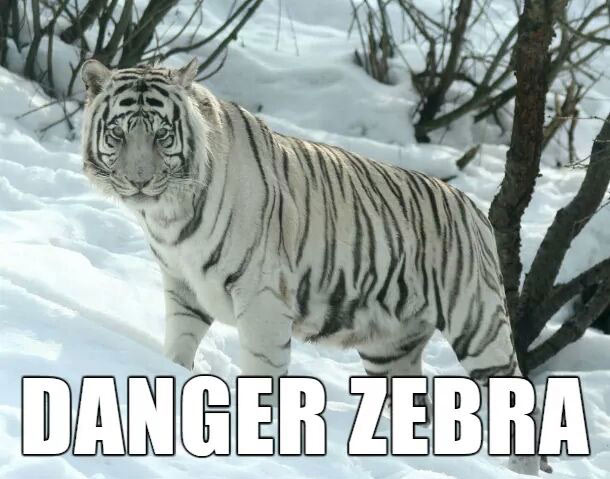 The Best Suitable Alternate Animal Names (29 Photos)