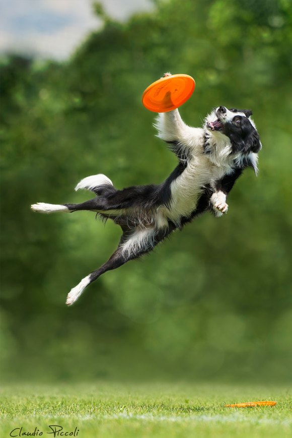 dogs-can-fly 1