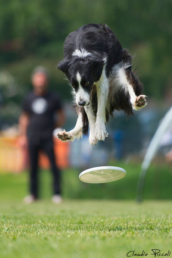 dogs-can-fly 3