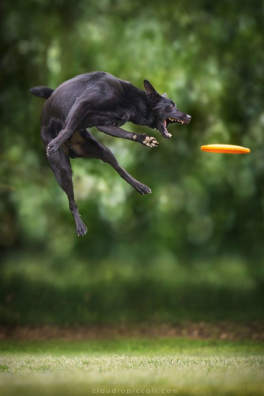 dogs-can-fly 5