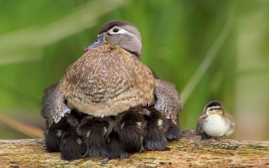 cute-bird-parents-18