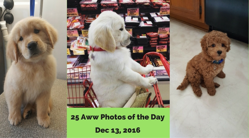 25 Aww Photos of the Day - Dec 13, 2016