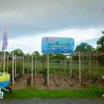 Davao Crocodile Park (9)