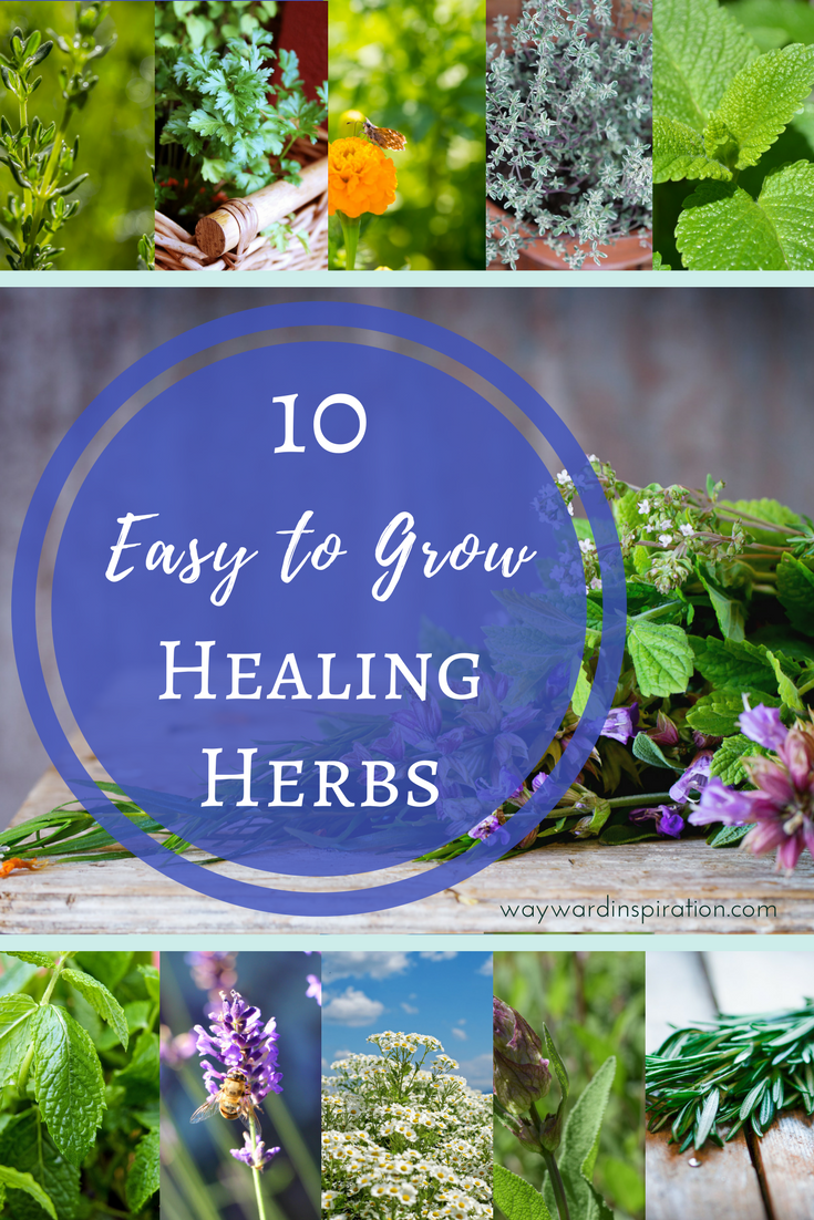 10 Easy To Grow Healing Herbs