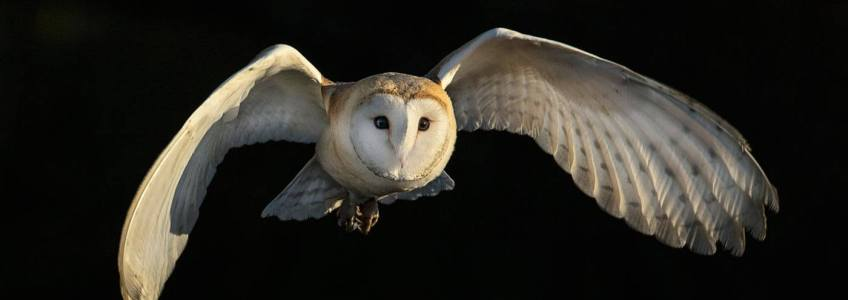 3D Printing Replicates Silent Flight Owls Next Gen Aircraft