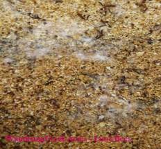 Mold on cappings on bottom board