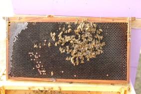 No more honey?