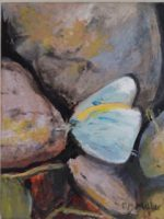 Light blue and yellow butterfly perched between two large rocks.
