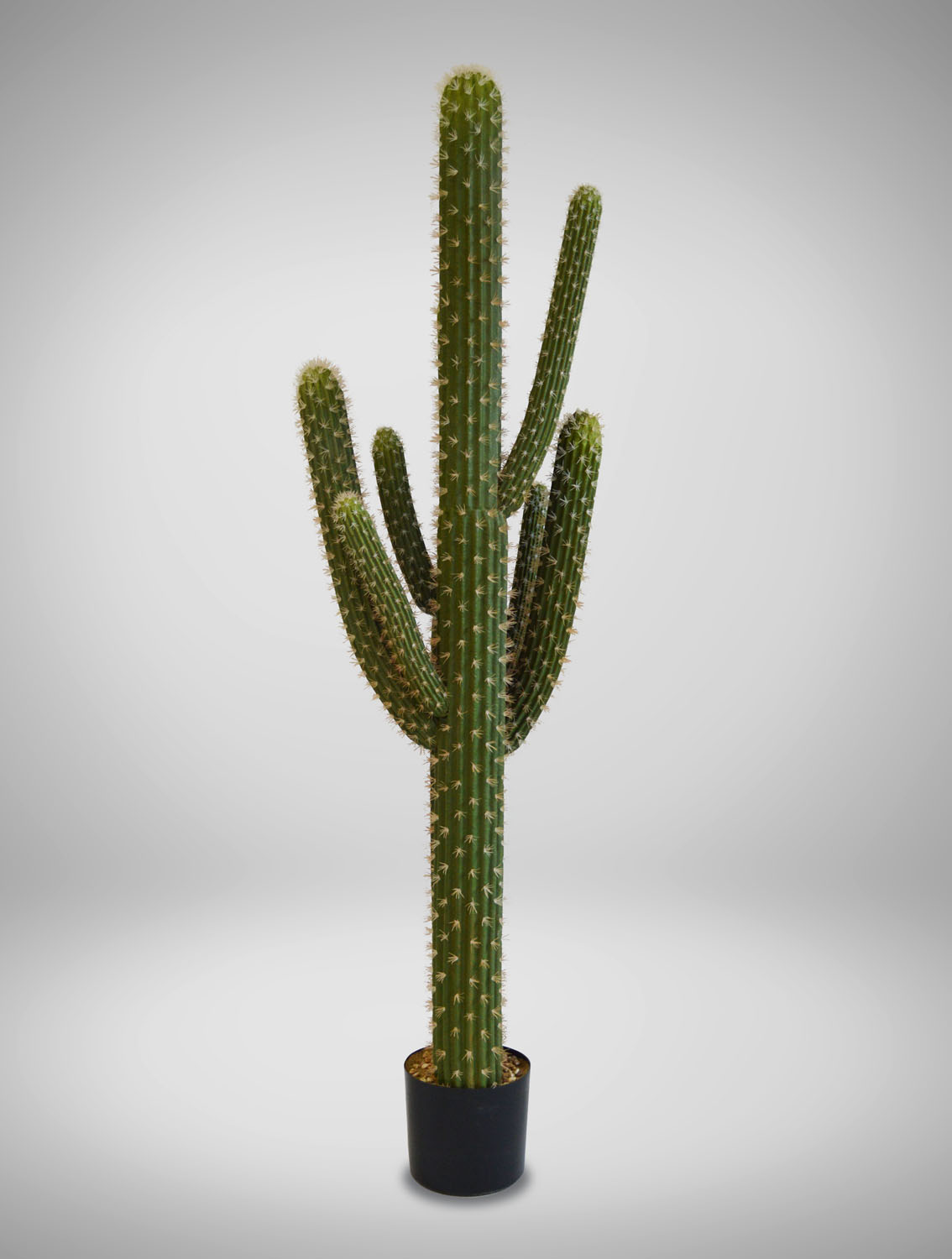 Cactus Saguaro Tall West Coast Event Productions Inc