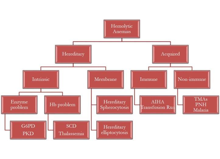 hemolytic-anemias