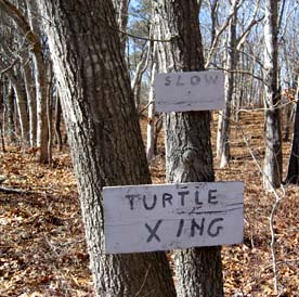 turtlecrossing