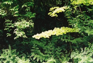 03_JanetBowstead_IntoTheGreen