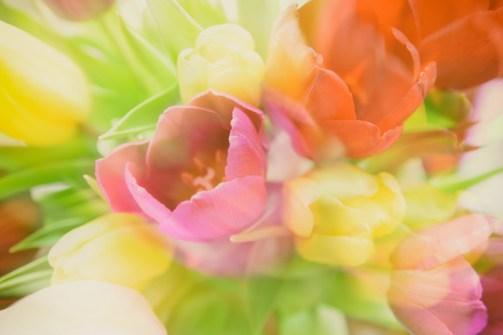 02_Matt Russell_Tulips