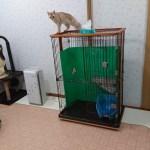 【ネコとの暮らし】共働き家庭の我が家でのネコの飼い方