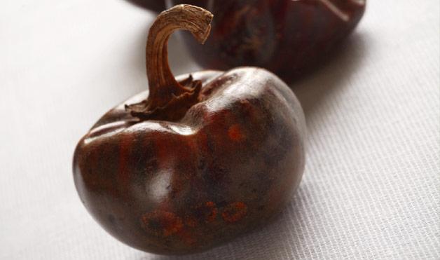 Image result for cascabel pepper