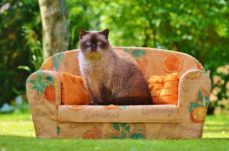 animal-animal-photography-cat-35662