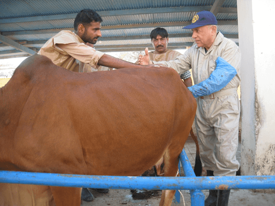 Training of the trainers: Dairy Reproduction