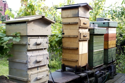 -Beehives_2-full.jpg