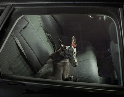 0martin-usborne-the-silence-of-dogs-in-cars-02.jpg