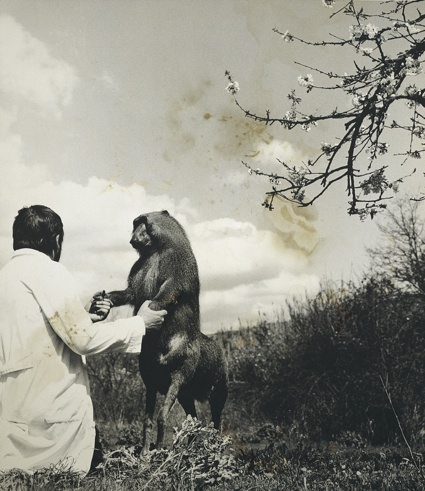 Centaurus Neandertalensis from the Fauna series by Joan Fontcuberta and Pere Formiguera, 1987 ∏ Joan Fontcuberta and Pere Formiguera.jpg