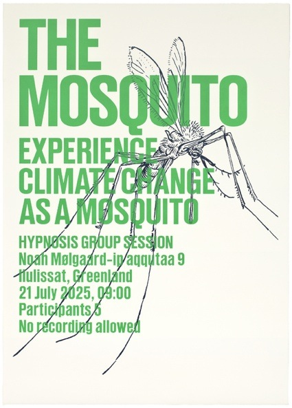 _experience_mosquito_web.jpg