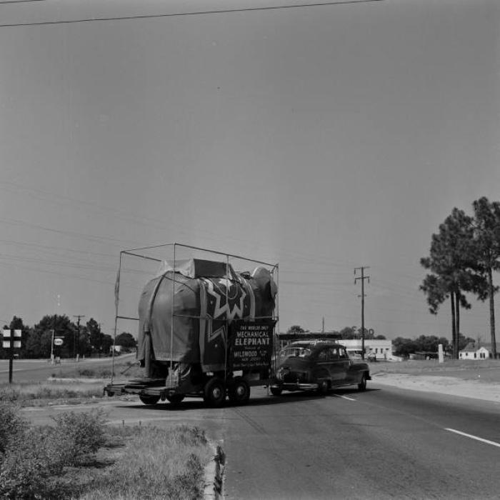 0-elephant-fayetteville-1953-life-p50