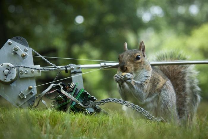 0anger-squirrel-nutkin-ian-ingram-02