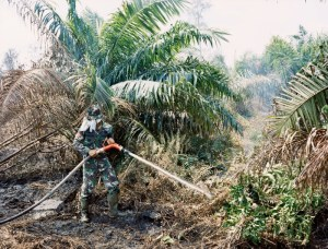 Palm oil, peatfires, Nutella and the anthropocene