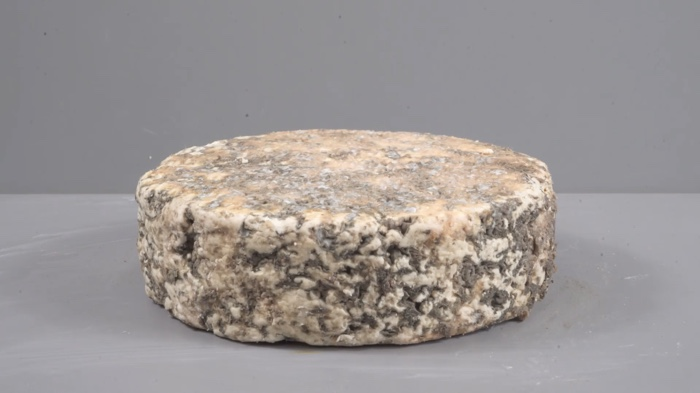 Making cheese from the black mould on your wall – We Make