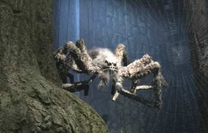 Spiders in Forbidden forest