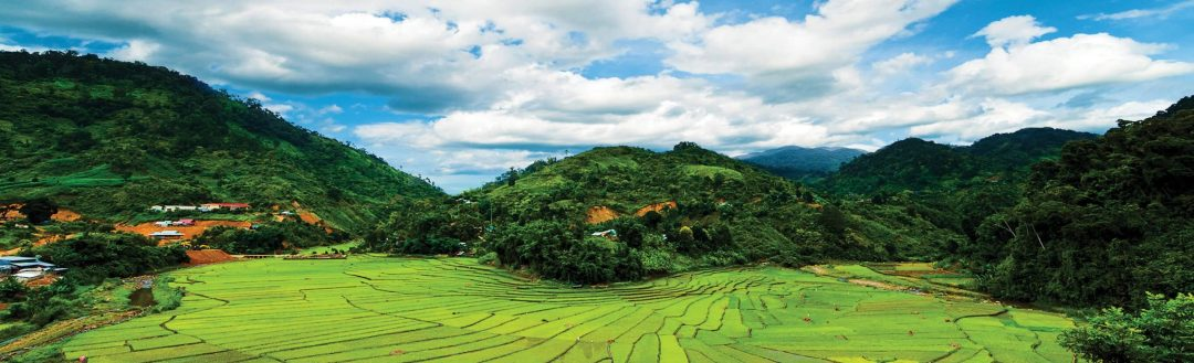 photo of rice cultivation