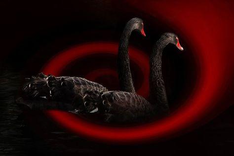 swan-468091__480