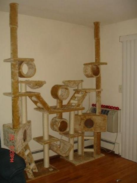 The 11 Best Large Cat Tree At The Best Price REVIEWED