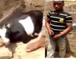 Young Man Caught Red-handed having Sex with a Goat in Ekiti State (video)