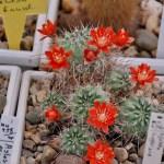Коллекция кактусов в оранжерее ботанического сада