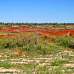 зона полупустыни в Казахстане