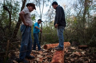 Juan runs a logging operation in the middle of impenetrable woodland. Juan checks up on how the operation is going and if anyone is stealing wood.