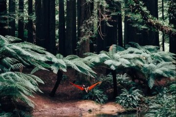 Jack Brookes Beech Forest Victoria vic hammock rainforest