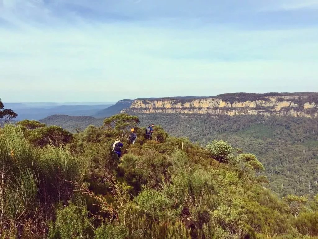 HIGH ABOVE THE TREE TOPS ON MALAITA WALL (NSW) Natalie Hardbattle Blue Mountains View, treetops, escarpment, horizon